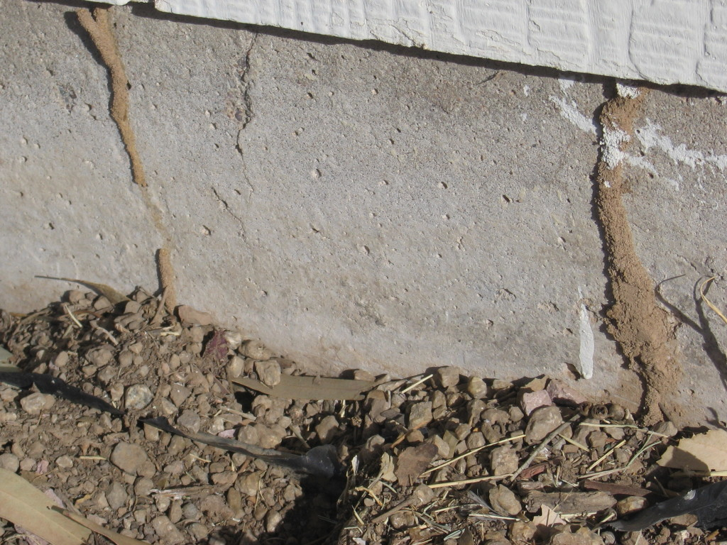 termite-inspection-damage-12-1024x768