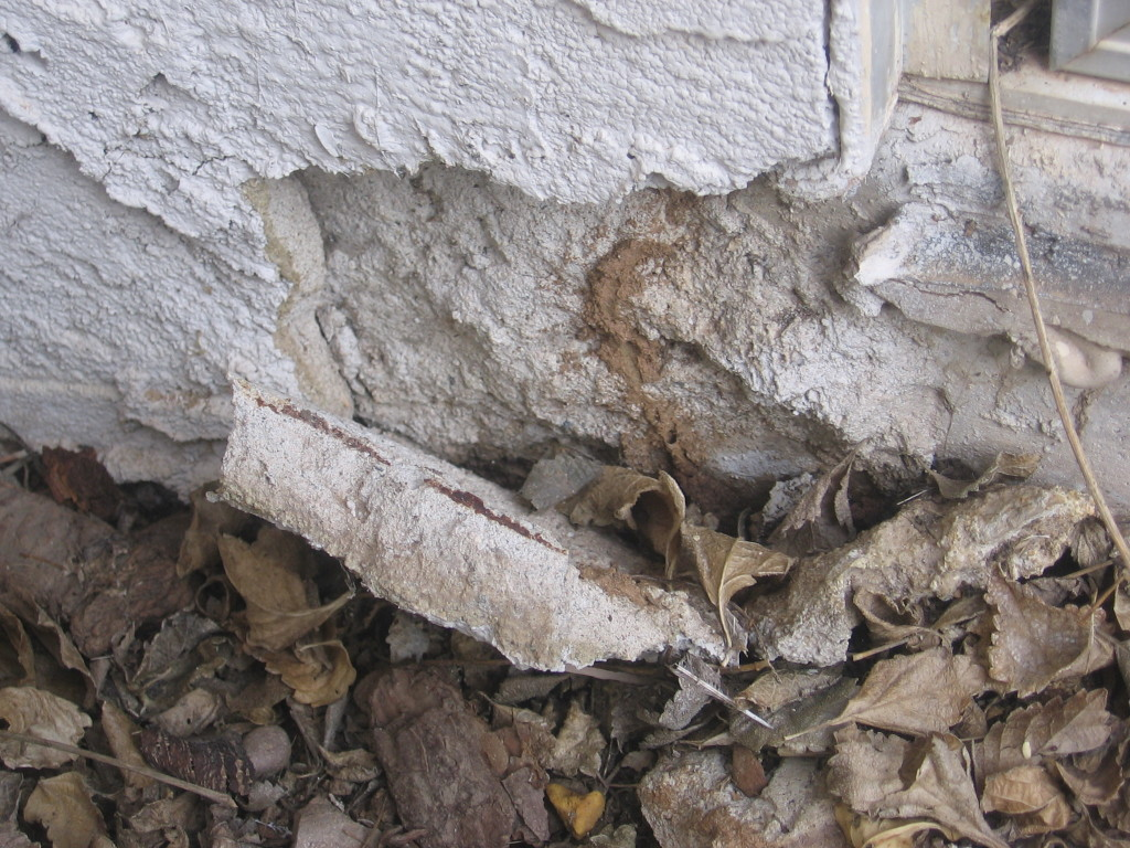 termite-inspection-damage-16-1024x768