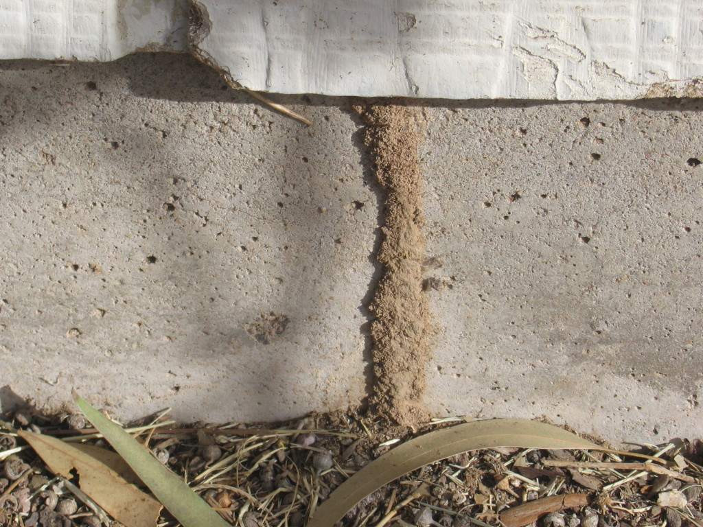 termite-inspection-damage-17-1024x768