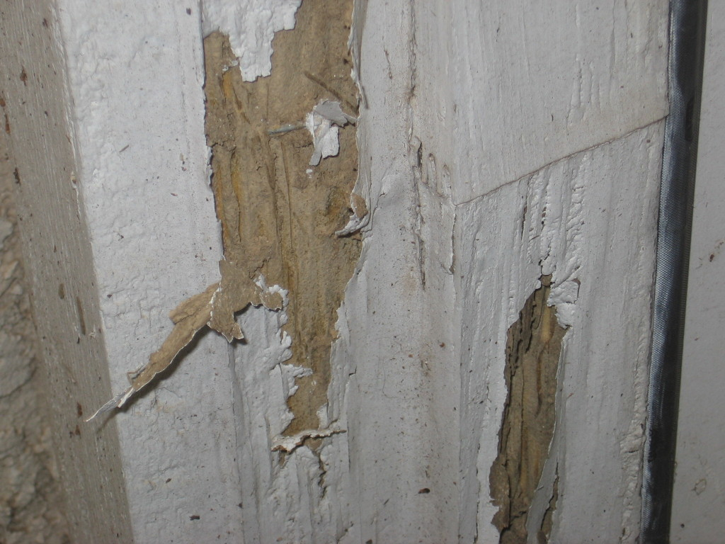 termite-inspection-damage-2-1024x768