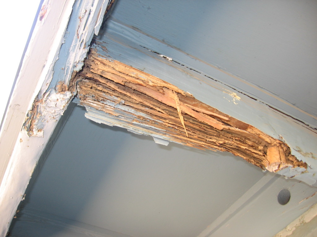 termite-inspection-damage-3-1024x768