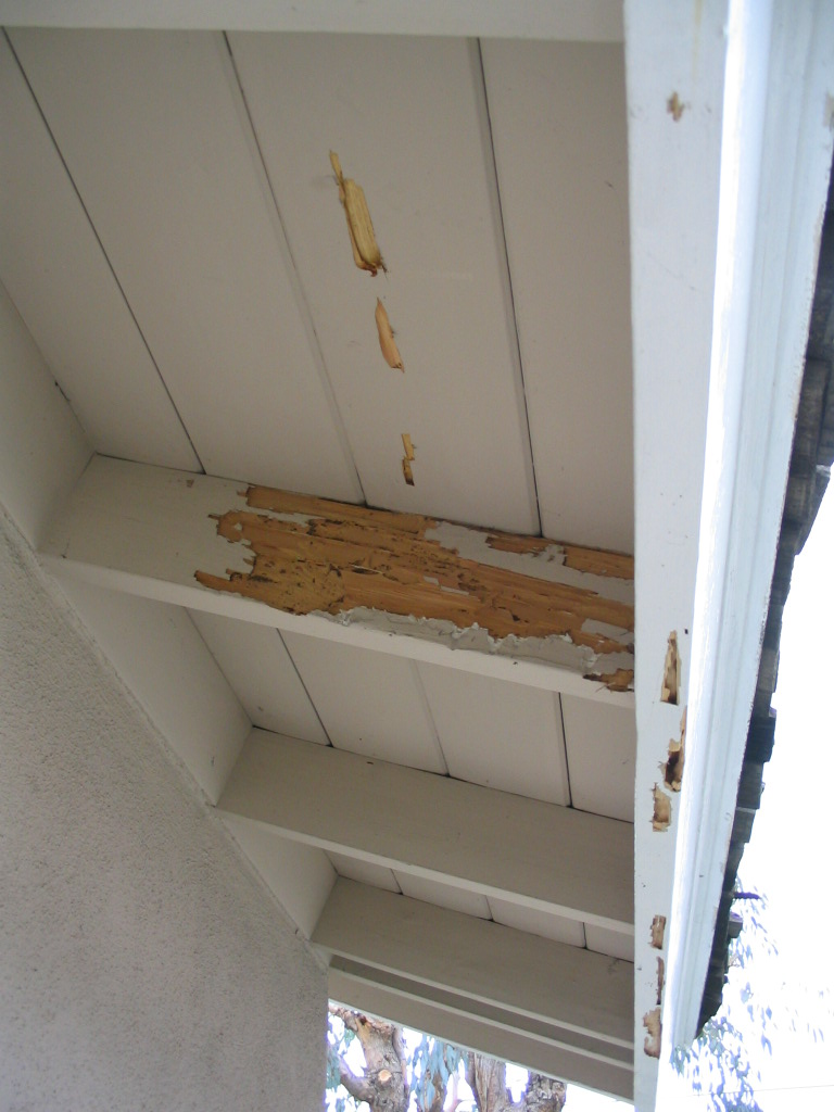 termite-inspection-damage-6
