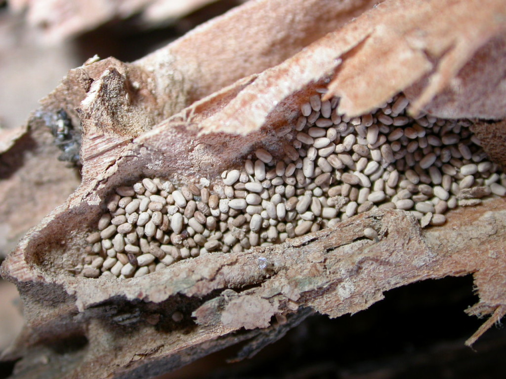 termite-inspection-damage-7-1024x768