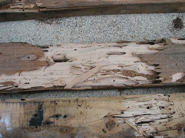 termite-inspection-damage-9